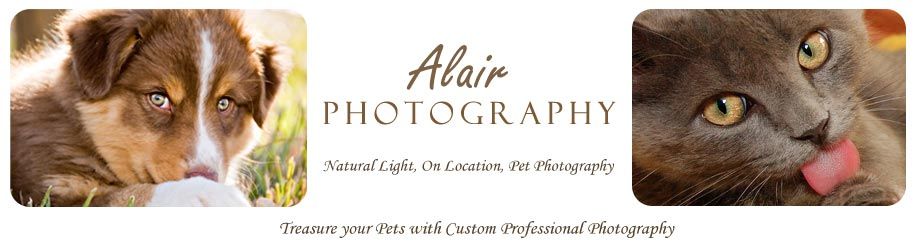 Alair Photography - Treasure Your Pets!